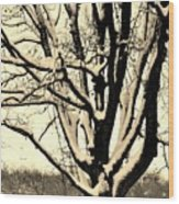 Snow Sitting On Top The Tree Wood Print