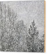 Snow Squawl Wood Print by Laura Mountainspring