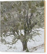 Snow Tree  Wood Print