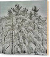 Snow Trees  Hdr Wood Print