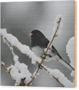 Snow Watcher Wood Print