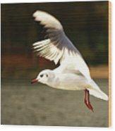 Snow White Seagull Wood Print