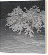 Snow White Tree Wood Print