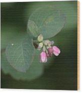 Snowberry Blossom Wood Print