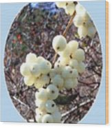 Snowberry Cluster Wood Print