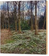 Snowdrop Woods 2 Wood Print