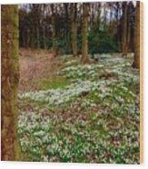 Snowdrop Woods Wood Print