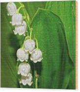 May-lily Wood Print