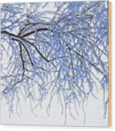 Snowy Branches Wood Print