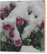 Snowy Chrysanthemums Wood Print