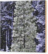Snowy Day Pine Tree Wood Print