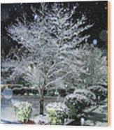 Snowy Dogwood Tree At Night Wood Print
