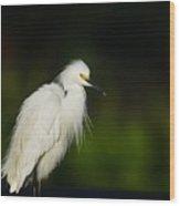 Snowy Egret 4 Wood Print