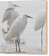 Snowy Egret And Friends Wood Print