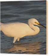 Snowy Egret By Sunset Wood Print