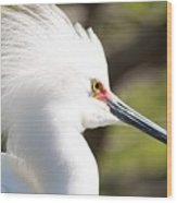Snowy Egret Closeup Wood Print