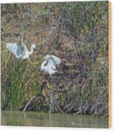 Snowy Egret Confrontation 8664-022018-1 Wood Print
