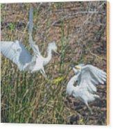 Snowy Egret Confrontation 8664-022018-1cr Wood Print
