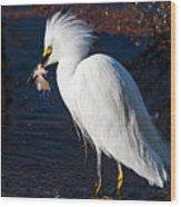 Snowy Egret Eating Fish Wood Print
