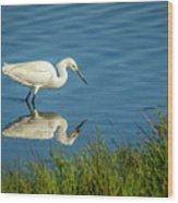 Snowy Egret Feeding  Wood Print