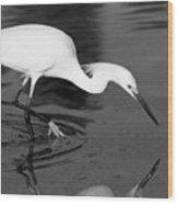 Snowy Egret Fishing Wood Print