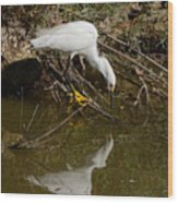 Snowy Egret Fishing From Branches Wood Print