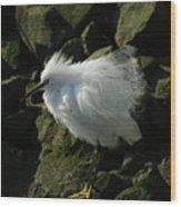 Snowy Egret Fluffy Wood Print