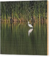 Snowy Egret In Marsh Reinterpreted Wood Print