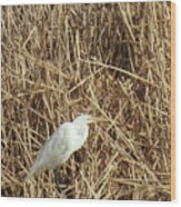 Snowy Egret In Tall Grasses Wood Print