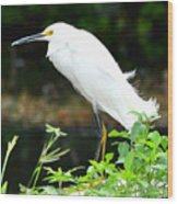 Snowy Egret In The Everglades Wood Print