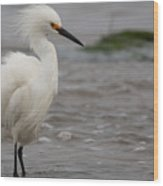 Snowy Egret In The Wind Wood Print