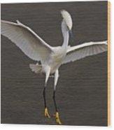 Snowy Egret Landing Wood Print