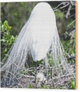 Snowy Egret Mom And Chick Wood Print