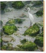 Snowy Egret On Mossy Rocks Wood Print