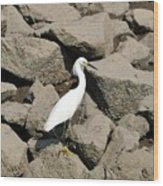 Snowy Egret On The Rocks Wood Print