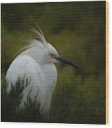 Snowy Egret Portrait Da Wood Print
