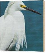Snowy Egret Portrait Wood Print