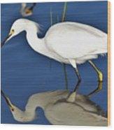 Snowy Egret Reflection Wood Print