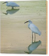 Snowy Egret Reflections  Wood Print