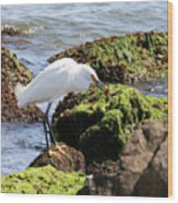 Snowy Egret  Series 2  1 Of 3  The Catch Wood Print