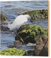 Snowy Egret  Series 2  2 Of 3  Preparing Wood Print