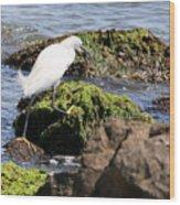 Snowy Egret  Series 2  3 Of 3  Adjusting Wood Print