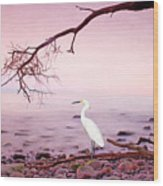 Snowy Egret Solitude Wood Print