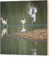Snowy Egret Stretch 4280-080917-2cr Wood Print