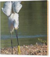 Snowy Egret Stretch 4280-080917-3cr Wood Print