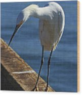 Snowy Egret That Minnow Will Be Fine Wood Print
