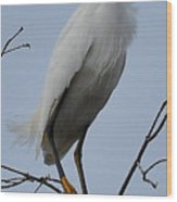 Snowy Egret  Watching Wood Print