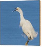 Snowy Egret With Attitude Wood Print