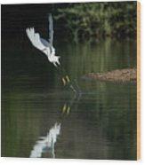 Snowy Egrets 080917-4290-1 Wood Print