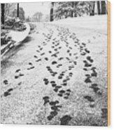 Snowy Footsteps Wood Print